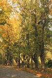 Autumn alley in the park Stock Image