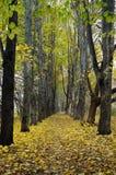 Autumn alley Stock Photo