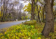 Autumn alley in park. Autumn alley in bulgarian park Stock Photography