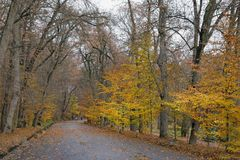 Autumn. Alley in the park. Autumn. Central Alley in park Sofiyivka,  Uman city, Central Ukraine Stock Images