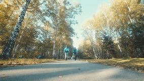 Autumn alley, park with autumn trees. Walk on bicycles in nice weather stock video