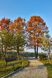 Autumn alley in the park. With big trees, a bench and the lake Royalty Free Stock Photography