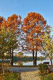 Autumn alley in the park. With big trees and the lake Royalty Free Stock Photo