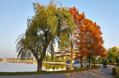 Autumn alley in the park. With big trees, some people and the lake Stock Image
