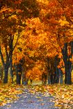 Beautiful autumn city landscape, russia, park, golden color. Autumn alley in the park, europe, trees Stock Photos