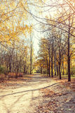 Autumn alley in the park in the fall sunny day Stock Photos