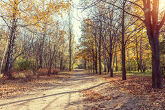 Autumn alley in the park in the fall sunny day Stock Photo