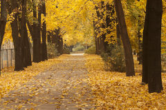 Autumn alley in the park Royalty Free Stock Images