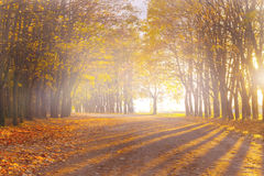 Autumn alley in the park Royalty Free Stock Photo