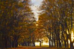 Autumn alley in the park Stock Photos