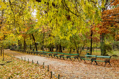 Autumn alley in park. Autumn view with alley in a Cismigiu park Royalty Free Stock Photography