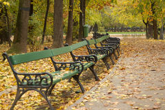 Autumn alley in park. Autumn view with alley in a Cismigiu park Stock Images