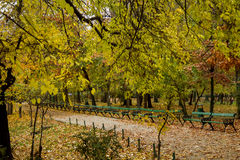 Autumn alley in park. Autumn view with alley in a Cismigiu park with empty benches Stock Photography