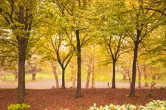 Autumn alley park, Walking in the nature. royalty free stock photography