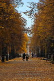 Autumn alley. Photo of two elderly people walking on the autumn alley Stock Photo
