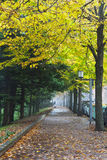 Autumn alley. Royalty Free Stock Photo