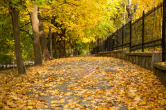 Autumn alley with side fence Royalty Free Stock Photography
