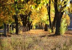 Autumn alley Stock Image