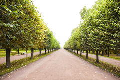Autumn Path in St. Petersburg Royalty Free Stock Image