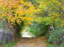 Autumn alley. An alley surrounded by trees with yellow leaves in autumn Stock Photos