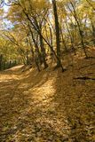 Autumn along the Mississippi River in Minneapolis. Autumn forest landscape Stock Photo