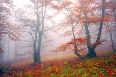 Autumn in the alpine forest Royalty Free Stock Photo