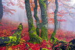 Autumn in the alpine forest Royalty Free Stock Image