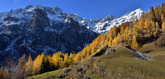 Autumn Alpine landscapes. Autumn Alpine landscape with fog and yellow trees Royalty Free Stock Photo