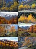 Autumn Alpine-landschap met mist en gele bomen royalty-vrije stock afbeeldingen