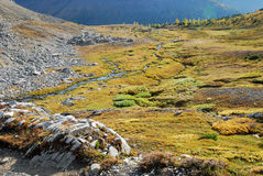 Autumn alpine meadows Royalty Free Stock Photo