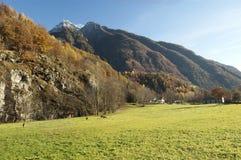 Autumn alpine pasture landscape. With cows, Verampio, Italy Royalty Free Stock Photo