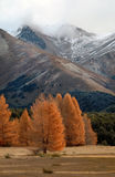 Autumn in the Alps 1. Autumnal colours at Castle Hill in the Southern Alps of New Zealand Stock Photo