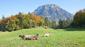 Autumn in alps Stock Images