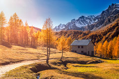 Autumn in the alps  Alpe Devero Italy Royalty Free Stock Photos