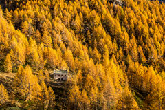 Autumn in the alps  Alpe Devero Italy Royalty Free Stock Photography