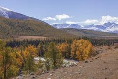 Autumn Altai Stockfoto