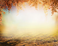 Autumn amazing blurred nature background with lawn and colorful foliage in park Stock Images