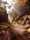 Autumn. Amazing light at forest path Stock Images