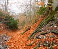 Autumn ancient forest Stock Photos