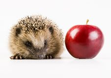 Free Autumn Animal Stock Image - 2190611