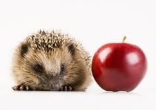 Free Autumn Animal Stock Photography - 2190622