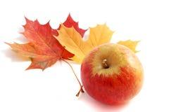 Autumn apple Stock Photography