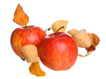 Autumn apple Royalty Free Stock Image