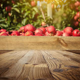 Autumn apple orchard . wooden background Royalty Free Stock Images
