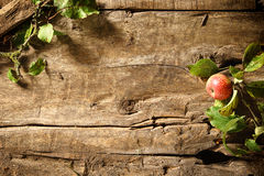 Autumn apple on a rustic wood background stock photos