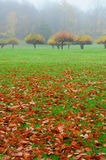 Autumn Apple Trees. Apple trees in the autumn landscape in New England Stock Photo