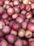 Autumn Apples Royalty-vrije Stock Foto