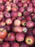 Autumn Apples foto de stock