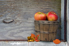 Autumn Apples Royalty Free Stock Images