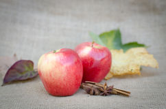 Autumn Apples Stock Photography